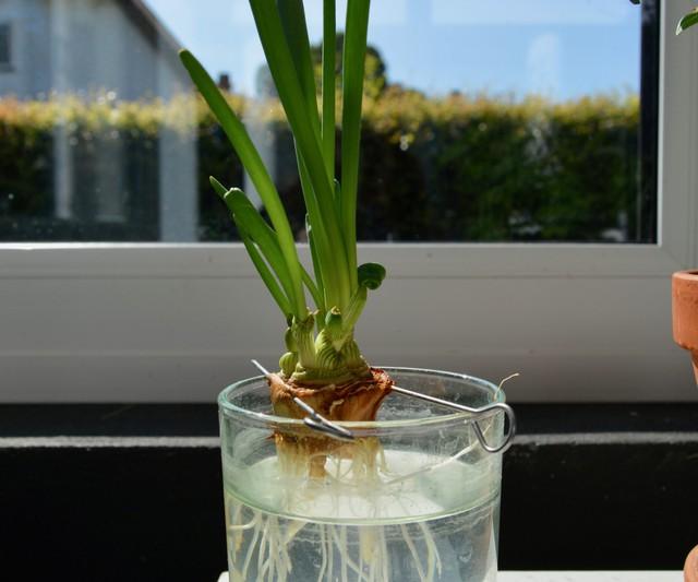 8 loại cây cảnh nên trồng trong nhà bếp vì có khả năng lọc không khí và khử mùi cực tốt - Ảnh 3.