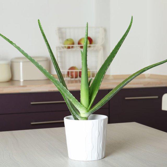 8 loại cây cảnh nên trồng trong nhà bếp vì có khả năng lọc không khí và khử mùi cực tốt - Ảnh 6.