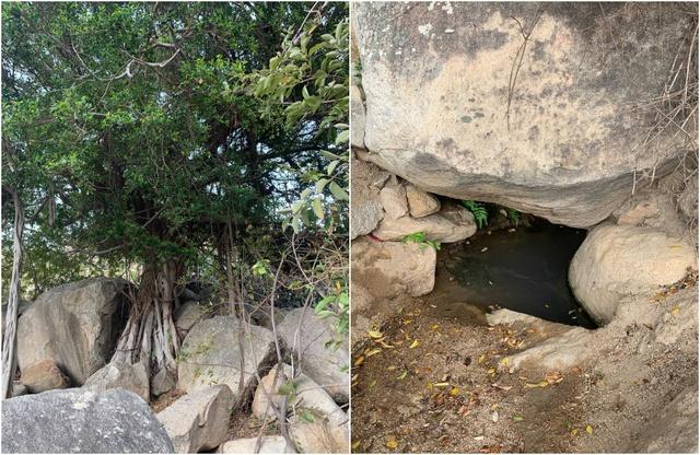 Chiến dịch Trồng rừng giữ nước: Để mùa khô Ninh Thuận không còn là cơn ác mộng - Ảnh 3.