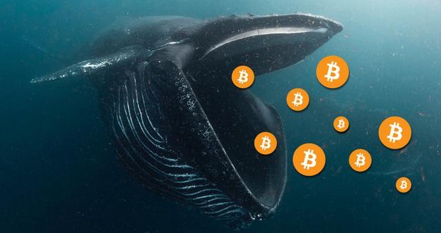 Số lượng cá voi bitcoin vừa sụt giảm xuống mức thấp đáng kể - Ảnh 2.