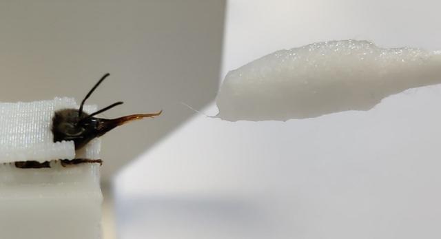 Ong có thể phát hiện người dương tính với COVID-19 chỉ trong vài giây, thậm chí cả khu vực có virus SARS-CoV-2 trong không khí - Ảnh 1.