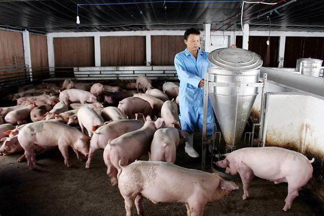 Vì sao thịt lợn rớt giá kỷ lục? - Ảnh 1.