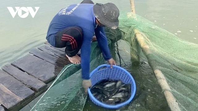 Nông dân nuôi cá sặc rằn tại Hậu Giang thua lỗ nặng - Ảnh 1.