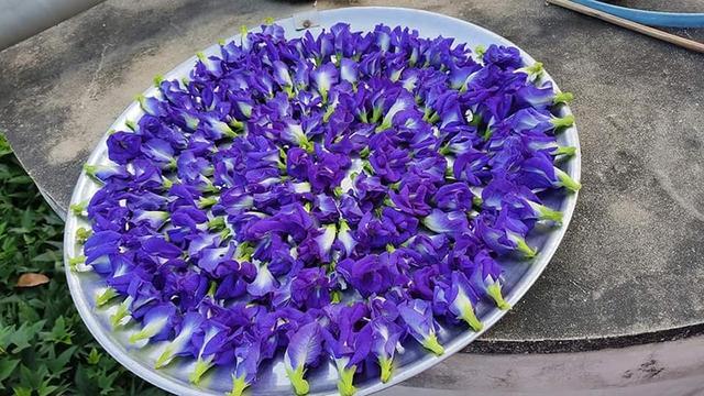 Thứ hoa rụng đầy bờ rào giờ được tiểu thương chợ mạng bán giá gần nửa triệu đồng/kg - Ảnh 4.