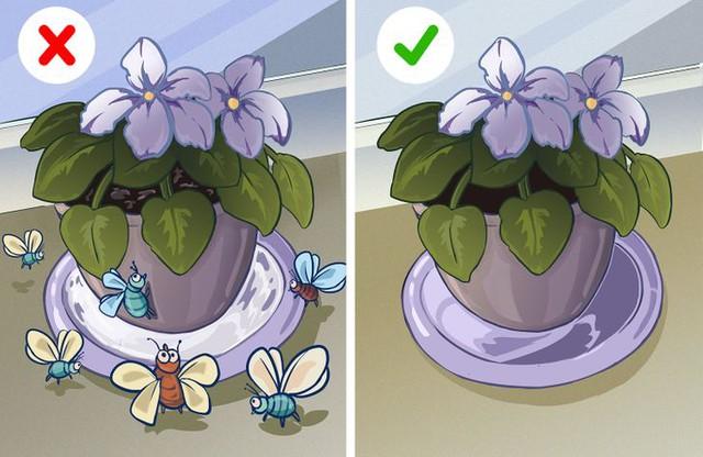 8 lỗi phổ biến vô tình đẩy nhà bạn thành nơi trú ẩn của côn trùng - Ảnh 7.