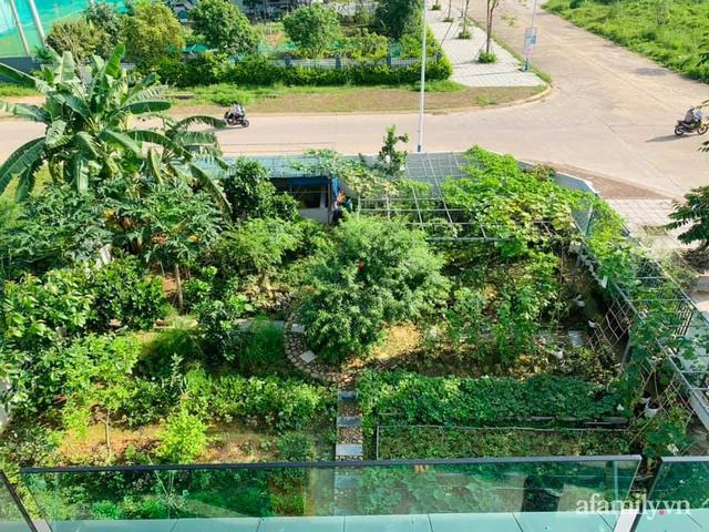 Nông trại rộng 300m² đẹp như cổ tích với đủ loại hoa và rau quả của mẹ 4 con ở Móng Cái, Quảng Ninh - Ảnh 1.
