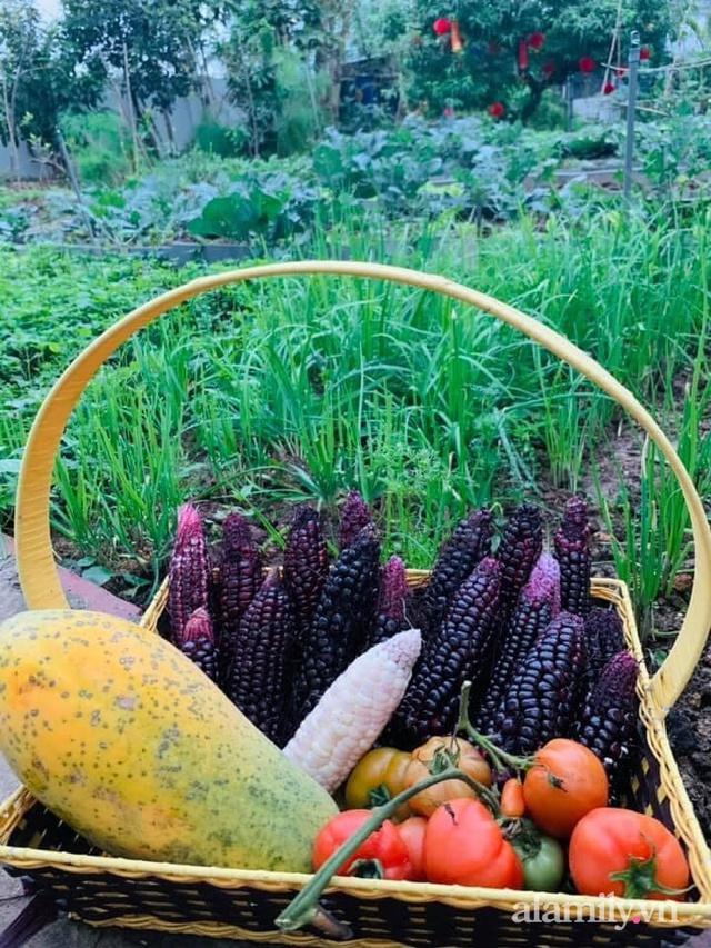Nông trại rộng 300m² đẹp như cổ tích với đủ loại hoa và rau quả của mẹ 4 con ở Móng Cái, Quảng Ninh - Ảnh 15.