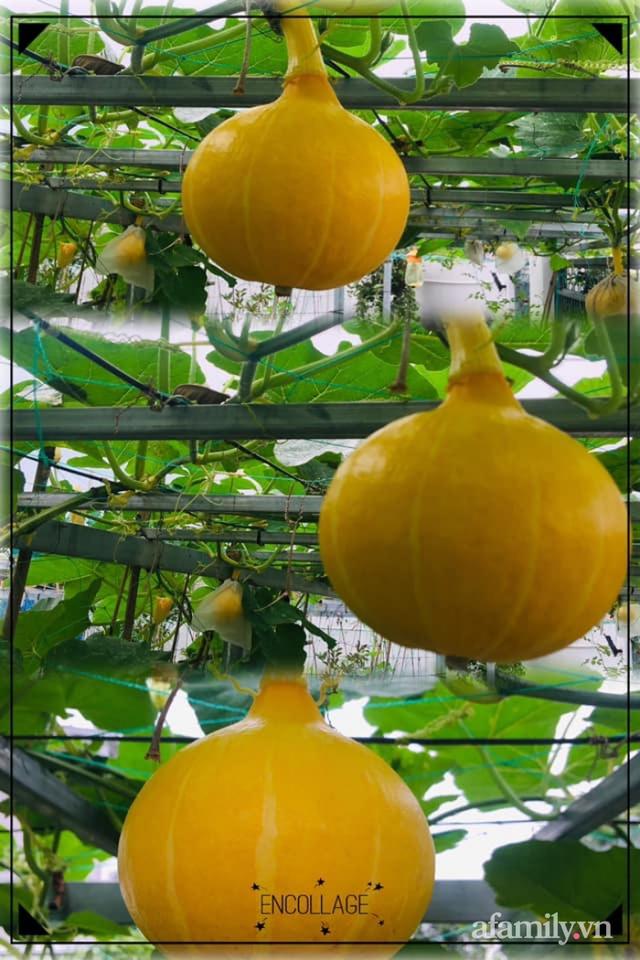 Nông trại rộng 300m² đẹp như cổ tích với đủ loại hoa và rau quả của mẹ 4 con ở Móng Cái, Quảng Ninh - Ảnh 16.
