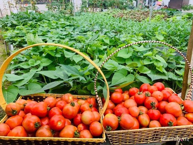 Nông trại rộng 300m² đẹp như cổ tích với đủ loại hoa và rau quả của mẹ 4 con ở Móng Cái, Quảng Ninh - Ảnh 6.