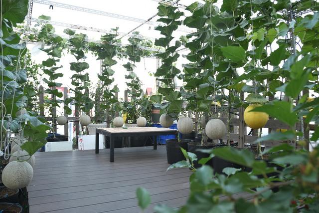 Ngắm vườn dưa lưới vạn người mê giữa lòng thành phố: Chẳng cần nhà to, nội thất sang trọng, khu vườn xanh mát này là đủ để ai cũng ước ao - Ảnh 2.