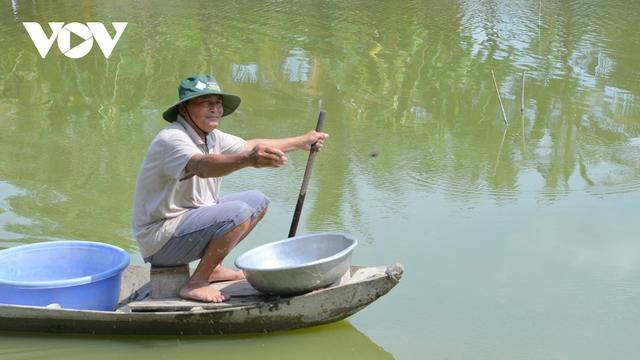 Thu nhập hàng trăm triệu đồng từ mô hình nuôi tôm càng xanh toàn đực - Ảnh 2.