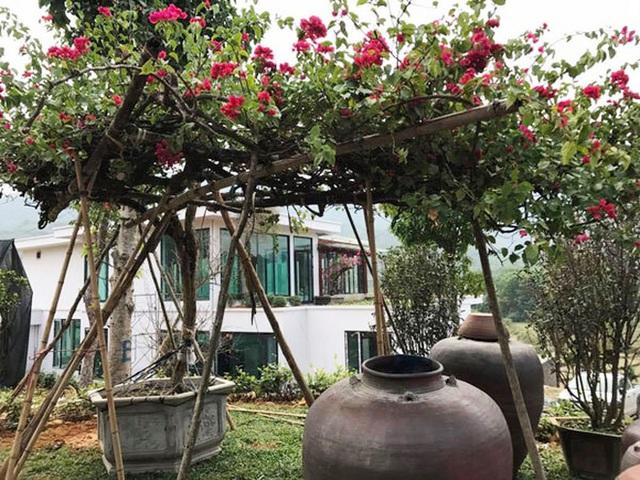 Khám phá căn biệt phủ ngoại ô của con gái PGS Văn Như Cương: Xây trên quả đồi rộng 200 m2, view cánh đồng rộng mênh mông, bên cạnh có suối chảy róc rách - Ảnh 3.