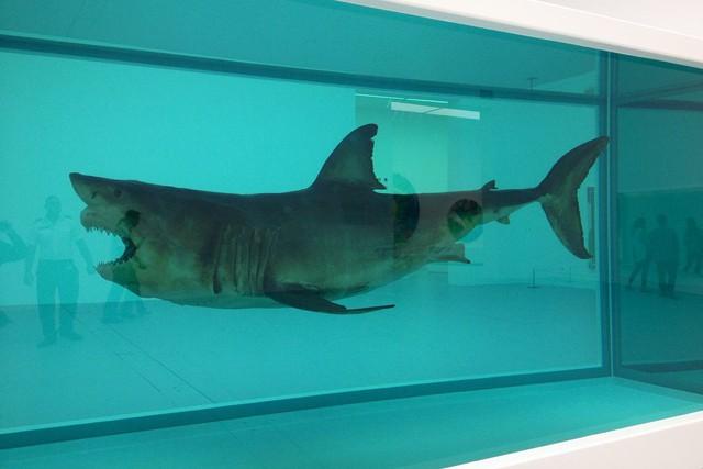 Sự giống nhau kỳ lạ giữa Bitcoin và xác con cá mập nằm trong bể foocmôn - Ảnh 1.