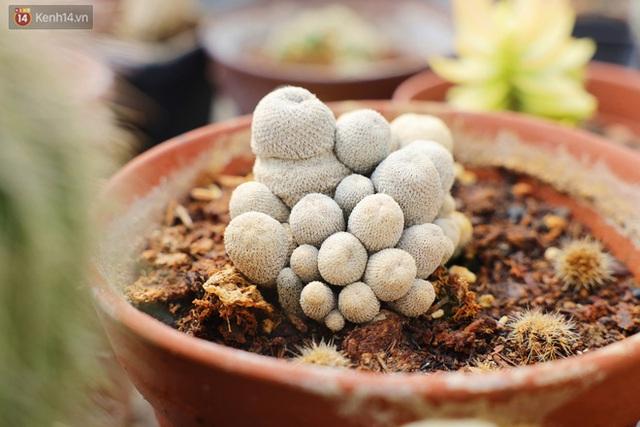Hoa mắt với vườn xương rồng hơn 10.000 cây của chú Phúc miền Tây: Có loại sống đến năm 30 tuổi mới ra hoa rồi chết - Ảnh 2.