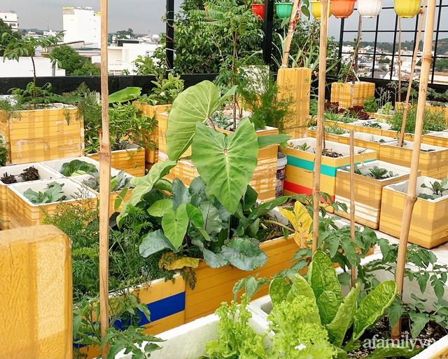 Vườn rau trong thùng xốp với đủ loại cây trái của mẹ 9x trồng cho con thưởng thức ở Buôn Ma Thuột - Ảnh 1.