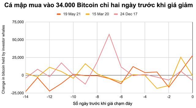 Cá con, cá mập đua nhau bắt đáy Bitcoin - Ảnh 2.
