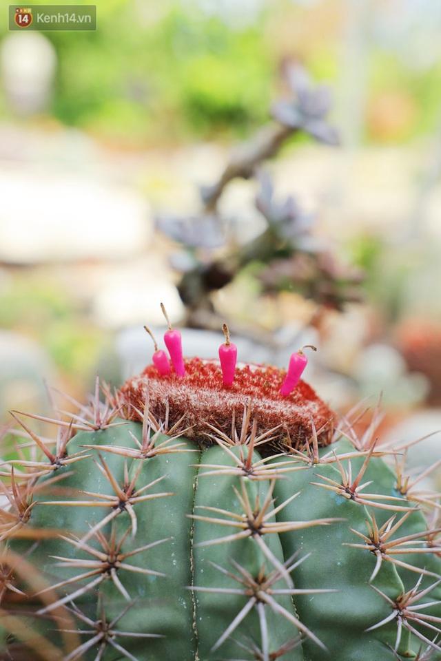Hoa mắt với vườn xương rồng hơn 10.000 cây của chú Phúc miền Tây: Có loại sống đến năm 30 tuổi mới ra hoa rồi chết - Ảnh 11.