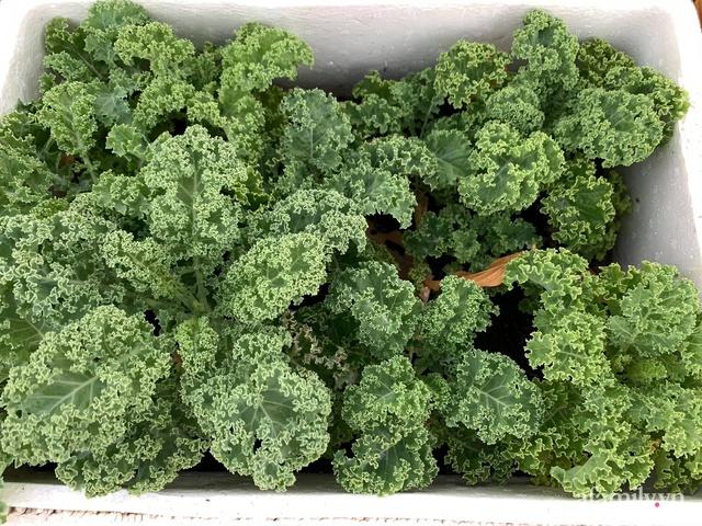 Vườn rau trong thùng xốp với đủ loại cây trái của mẹ 9x trồng cho con thưởng thức ở Buôn Ma Thuột - Ảnh 11.