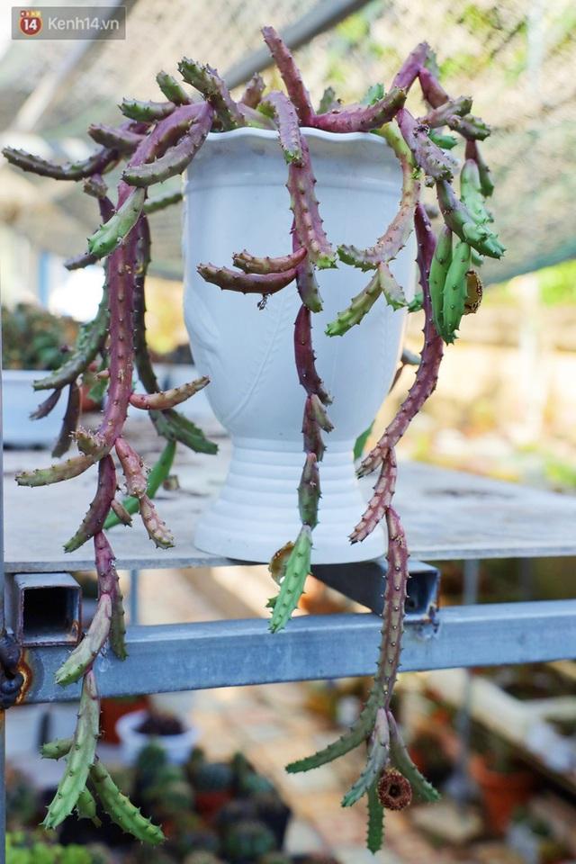 Hoa mắt với vườn xương rồng hơn 10.000 cây của chú Phúc miền Tây: Có loại sống đến năm 30 tuổi mới ra hoa rồi chết - Ảnh 14.