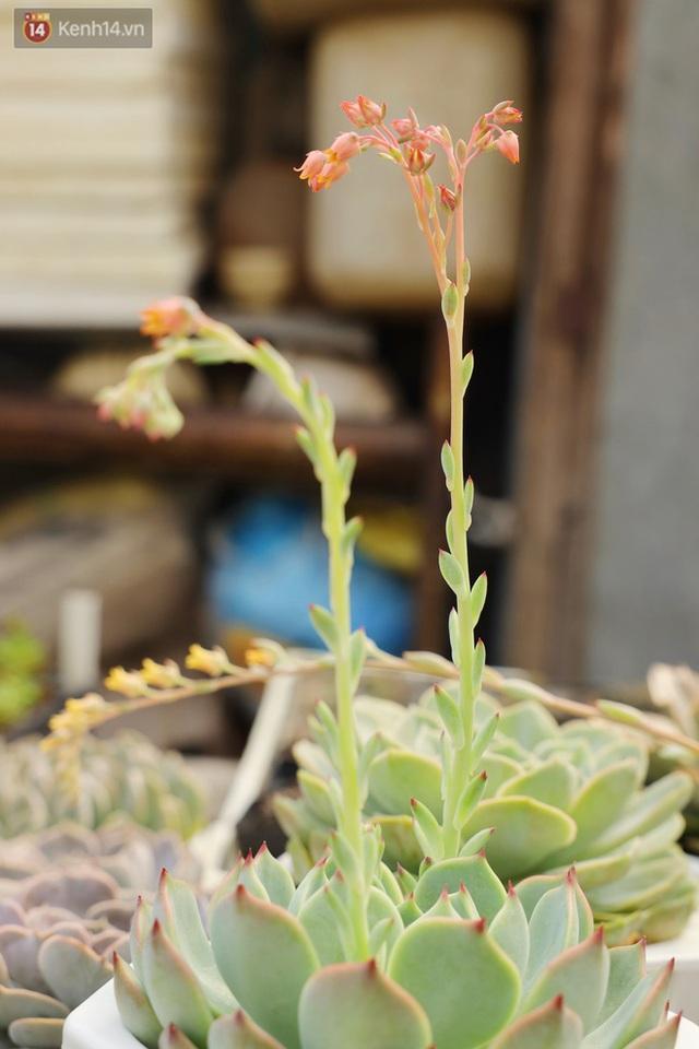 Hoa mắt với vườn xương rồng hơn 10.000 cây của chú Phúc miền Tây: Có loại sống đến năm 30 tuổi mới ra hoa rồi chết - Ảnh 16.
