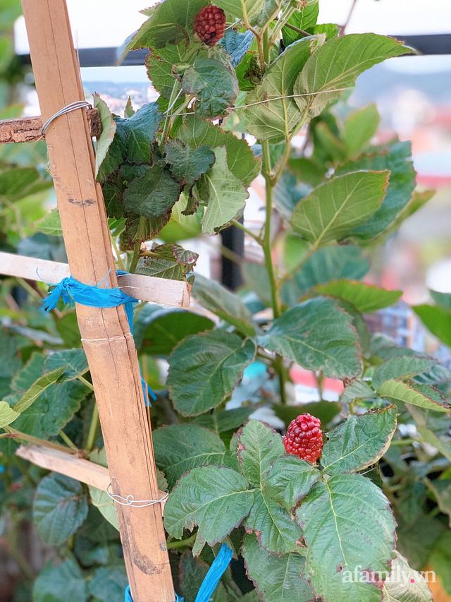 Vườn rau trong thùng xốp với đủ loại cây trái của mẹ 9x trồng cho con thưởng thức ở Buôn Ma Thuột - Ảnh 17.