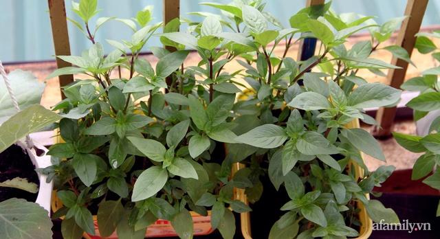 Vườn rau trong thùng xốp với đủ loại cây trái của mẹ 9x trồng cho con thưởng thức ở Buôn Ma Thuột - Ảnh 20.