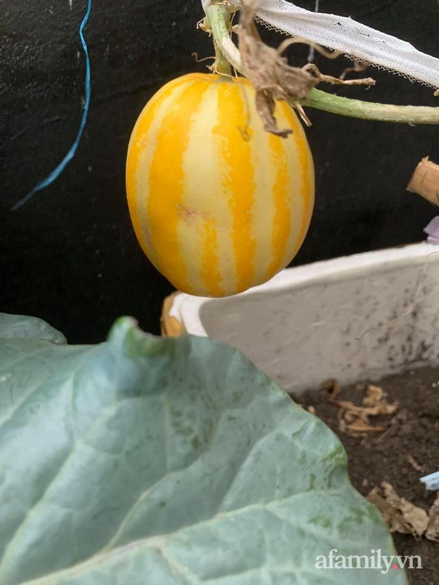 Vườn rau trong thùng xốp với đủ loại cây trái của mẹ 9x trồng cho con thưởng thức ở Buôn Ma Thuột - Ảnh 29.