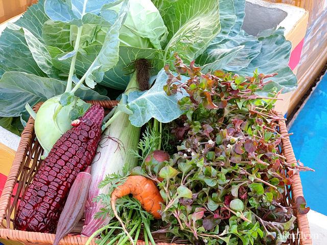 Vườn rau trong thùng xốp với đủ loại cây trái của mẹ 9x trồng cho con thưởng thức ở Buôn Ma Thuột - Ảnh 5.