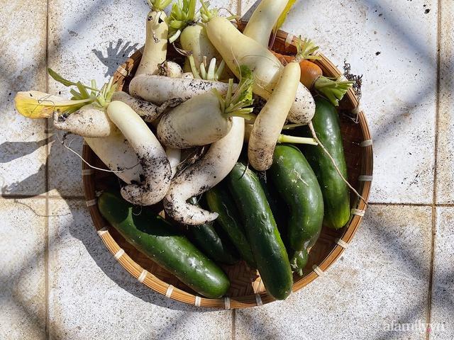 Vườn rau trong thùng xốp với đủ loại cây trái của mẹ 9x trồng cho con thưởng thức ở Buôn Ma Thuột - Ảnh 6.