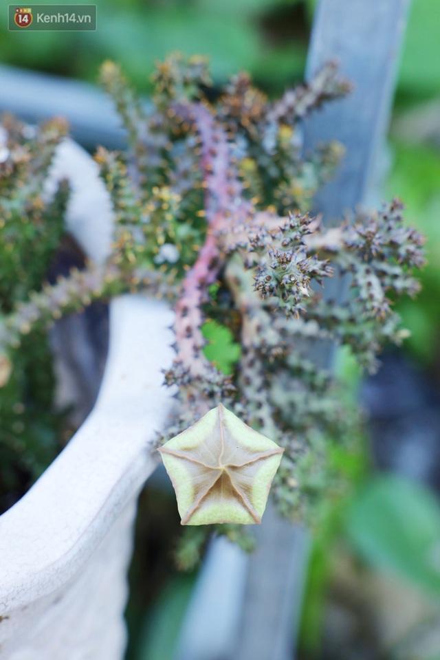 Hoa mắt với vườn xương rồng hơn 10.000 cây của chú Phúc miền Tây: Có loại sống đến năm 30 tuổi mới ra hoa rồi chết - Ảnh 7.