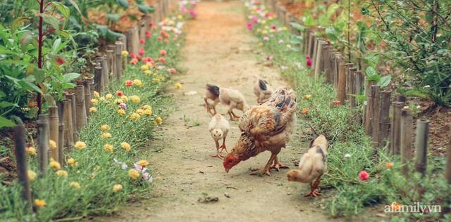 Khu vườn đậm chất thơ bình yên như cổ tích khiến hàng nghìn người mơ ước của cô gái rời Hà Nội về quê - Ảnh 2.