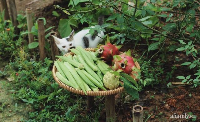 Khu vườn đậm chất thơ bình yên như cổ tích khiến hàng nghìn người mơ ước của cô gái rời Hà Nội về quê - Ảnh 13.