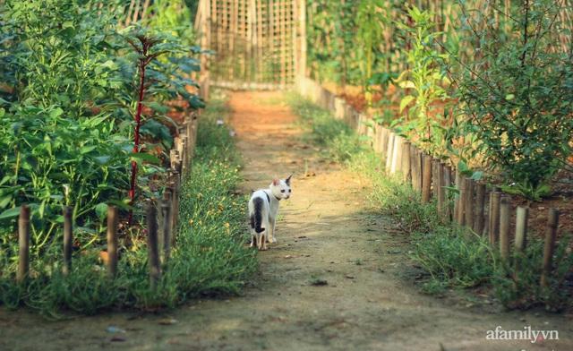 Khu vườn đậm chất thơ bình yên như cổ tích khiến hàng nghìn người mơ ước của cô gái rời Hà Nội về quê - Ảnh 3.