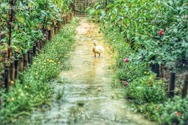 Khu vườn đậm chất thơ bình yên như cổ tích khiến hàng nghìn người mơ ước của cô gái rời Hà Nội về quê - Ảnh 4.