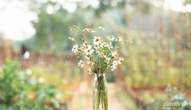 Khu vườn đậm chất thơ bình yên như cổ tích khiến hàng nghìn người mơ ước của cô gái rời Hà Nội về quê - Ảnh 31.