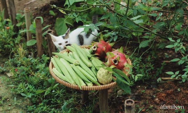 Khu vườn đậm chất thơ bình yên như cổ tích khiến hàng nghìn người mơ ước của cô gái rời Hà Nội về quê - Ảnh 32.
