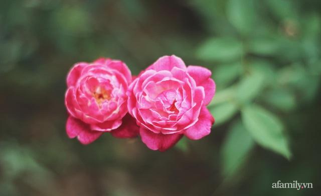 Khu vườn đậm chất thơ bình yên như cổ tích khiến hàng nghìn người mơ ước của cô gái rời Hà Nội về quê - Ảnh 34.