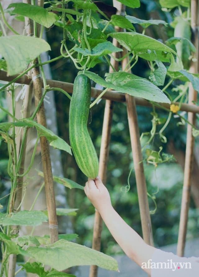Khu vườn đậm chất thơ bình yên như cổ tích khiến hàng nghìn người mơ ước của cô gái rời Hà Nội về quê - Ảnh 39.
