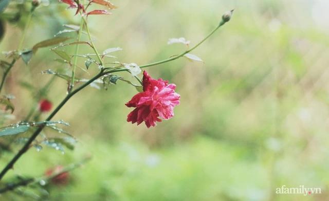Khu vườn đậm chất thơ bình yên như cổ tích khiến hàng nghìn người mơ ước của cô gái rời Hà Nội về quê - Ảnh 40.