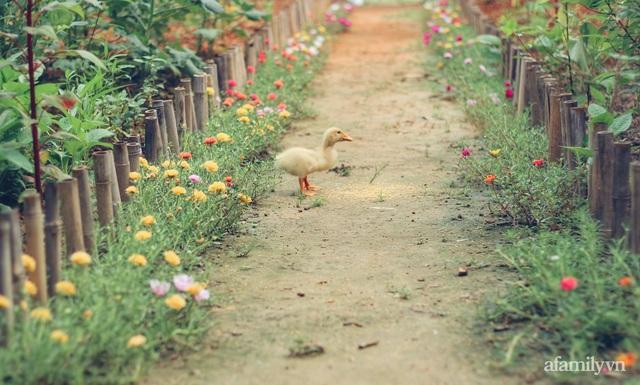 Khu vườn đậm chất thơ bình yên như cổ tích khiến hàng nghìn người mơ ước của cô gái rời Hà Nội về quê - Ảnh 5.