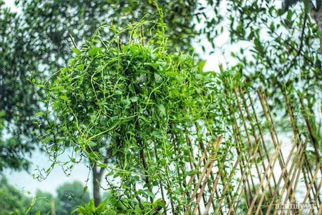 Khu vườn đậm chất thơ bình yên như cổ tích khiến hàng nghìn người mơ ước của cô gái rời Hà Nội về quê - Ảnh 41.