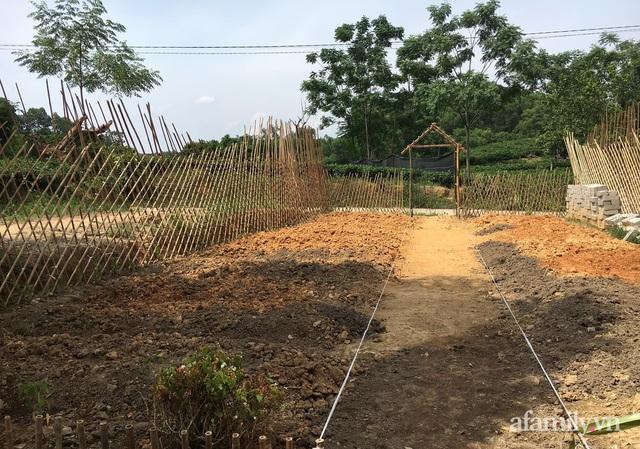 Khu vườn đậm chất thơ bình yên như cổ tích khiến hàng nghìn người mơ ước của cô gái rời Hà Nội về quê - Ảnh 6.