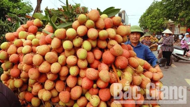 Bắc Giang xuất khẩu 15 tấn vải thiều sang thị trường Nhật Bản - Ảnh 1.