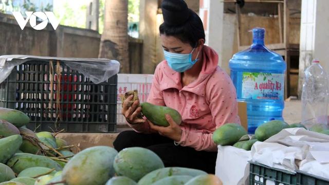Sơn La xuất khẩu 60 tấn xoài sang thị trường Trung Quốc - Ảnh 1.