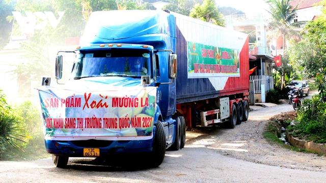 Sơn La xuất khẩu 60 tấn xoài sang thị trường Trung Quốc - Ảnh 2.