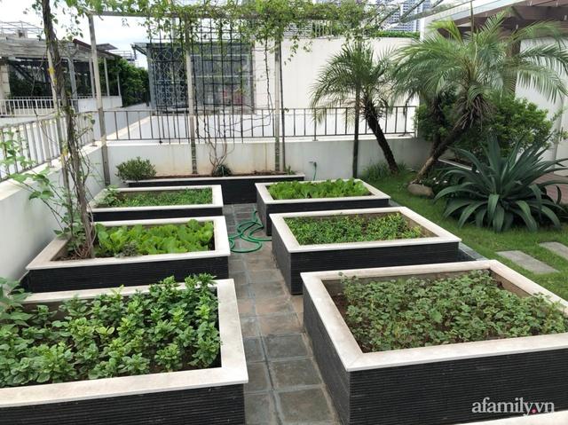 Vườn rau quả sạch 100m² trên mái nhà của mẹ 3 con ở Hà Nội - Ảnh 2.