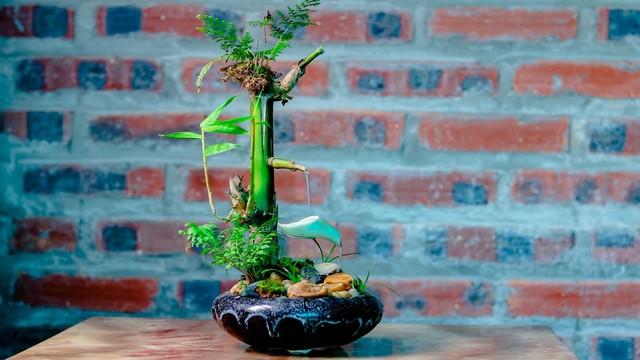 10 loại cây phong thủy trồng cho từng không gian của nhà phố, không cần nhiều ánh sáng, tưới ít nước vẫn tươi - Ảnh 2.