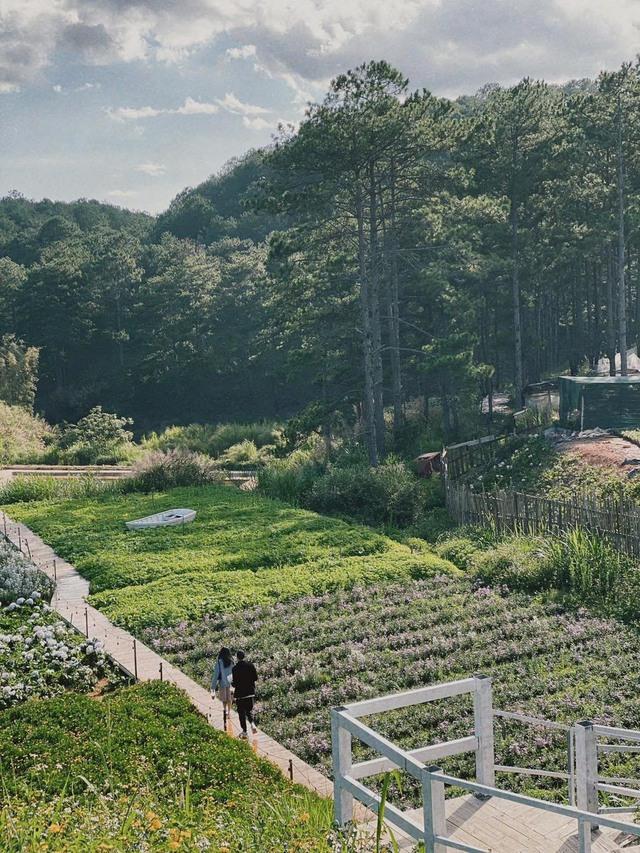 """Ngắm vườn rau xanh mướt giữa Đà Lạt của gia đình """"bỏ phố về rừng"""":  Không khí trong lành, rau sạch tươi tốt, ai cũng thích mê - Ảnh 2."""