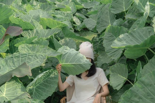 """Ngắm vườn rau xanh mướt giữa Đà Lạt của gia đình """"bỏ phố về rừng"""":  Không khí trong lành, rau sạch tươi tốt, ai cũng thích mê - Ảnh 4."""