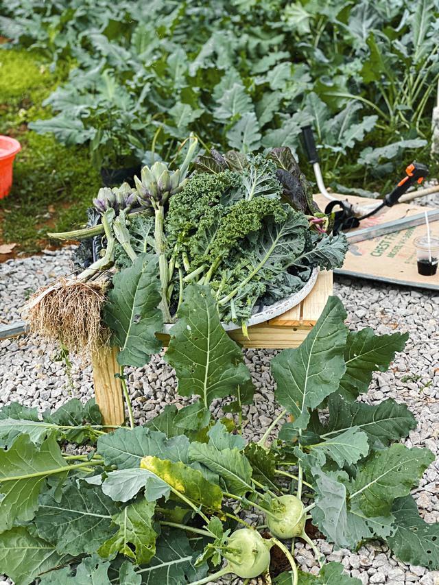 """Ngắm vườn rau xanh mướt giữa Đà Lạt của gia đình """"bỏ phố về rừng"""":  Không khí trong lành, rau sạch tươi tốt, ai cũng thích mê - Ảnh 5."""